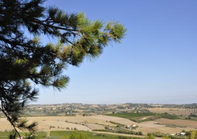 Monte dei bambini - San Savino